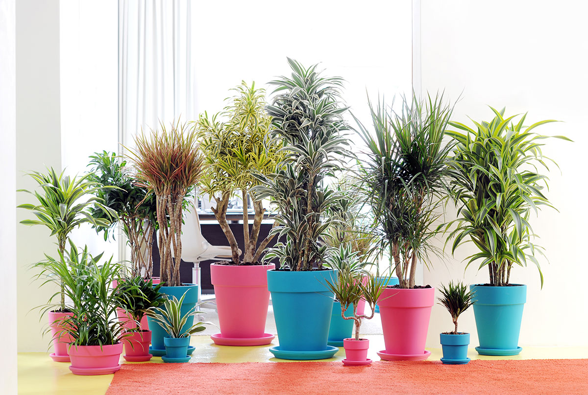 Las mejores plantas para decorar el cuarto y dormir tranquilo